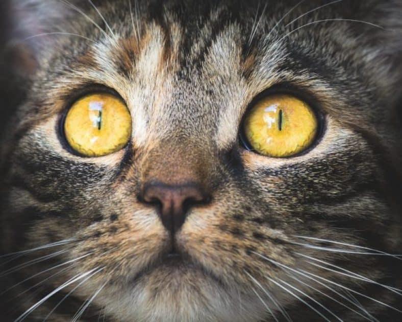 Cat Up Close