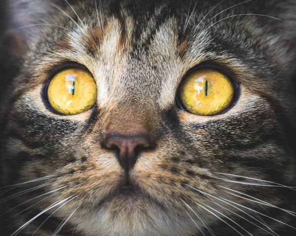 Cat Up Close