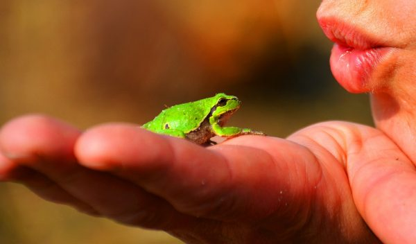 Holding a Live Frog
