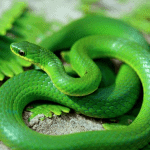 What Do Snakes Mean In Dreams