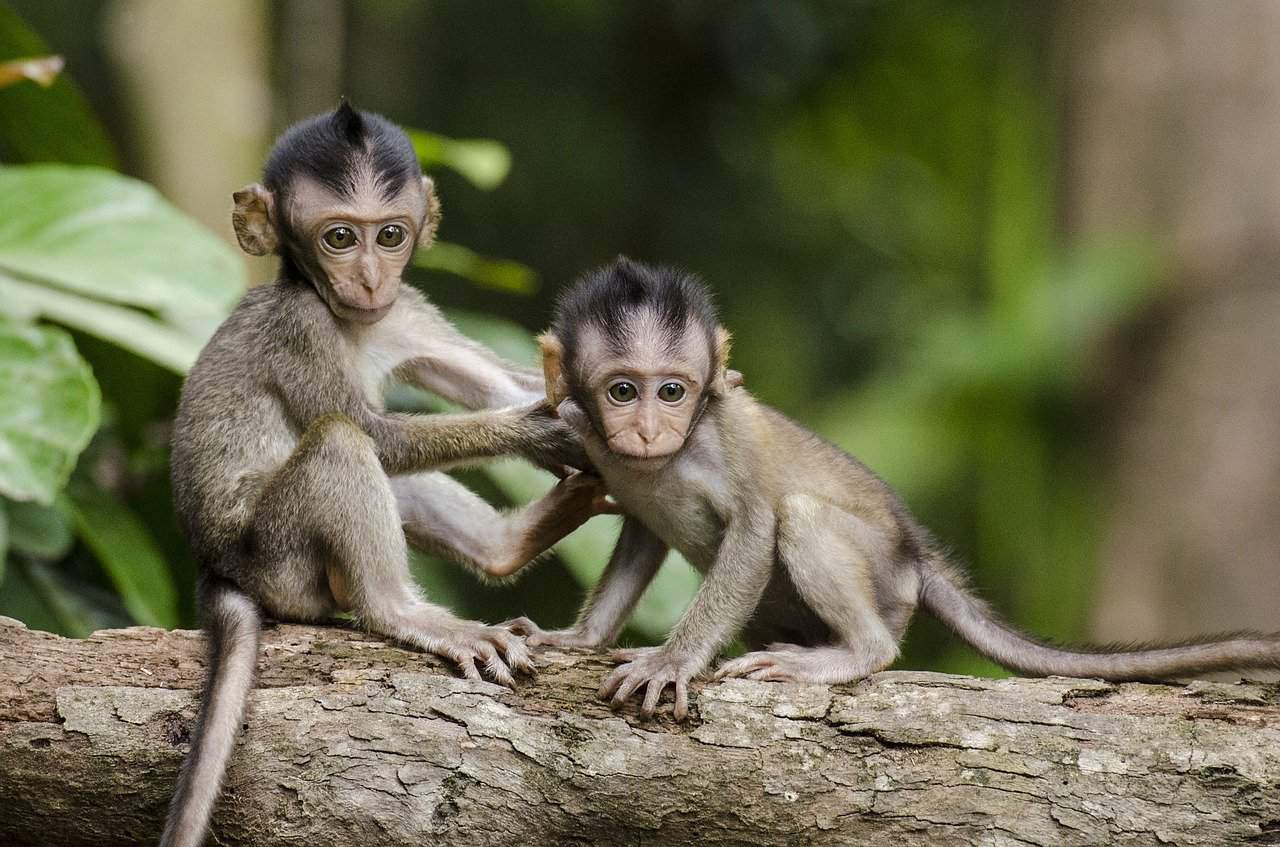 What Does it Mean When You Dream About Monkeys?