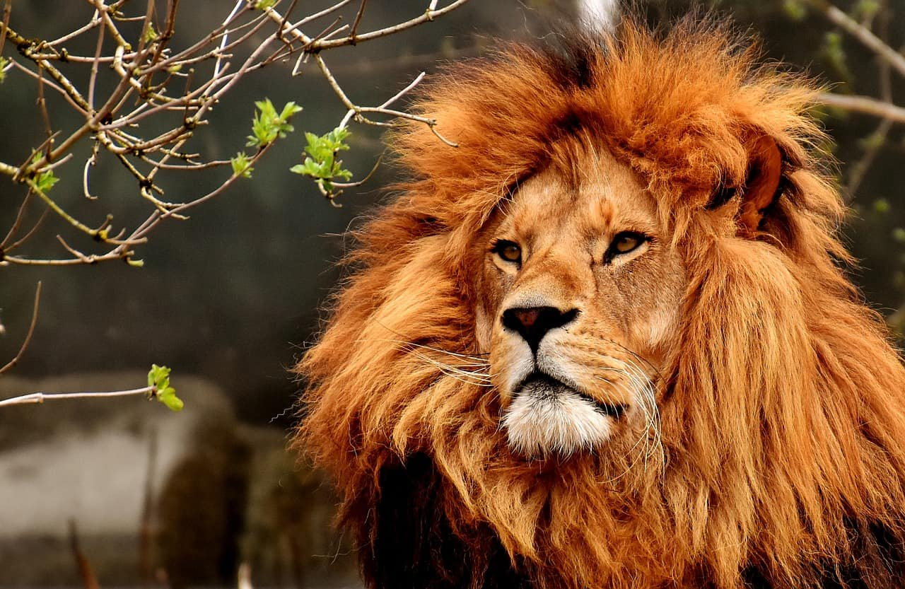 What Does a Lion Mean in a Dream?